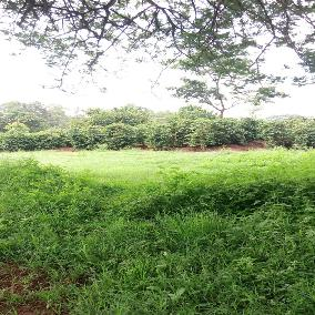 302 acres in kiambu kamiti road