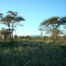 12 acres in bulls eye Kajiado County